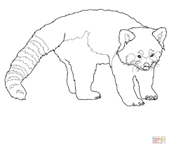 cute red panda coloring page free printable coloring pages
