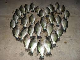 fish valentines happy valentines day to all the crappie