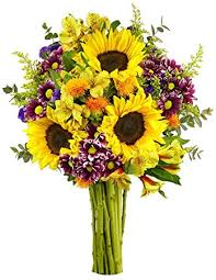 Vase Of Sunflowers Amazon Com Benchmark Bouquets Flowering Fields No Vase