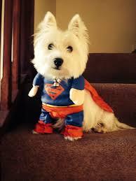 White Dog Halloween Costume Přes 25 Nejlepších Nápadů Na Téma Dog Costumes Na Pinterestu
