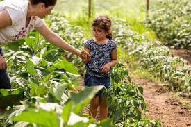 Family Garden Columbus Ohio 6 Benefits Of Growing Your Own Food