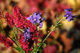 flowers in november november flowers our backyard seems artless