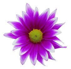 Flower by Flower Graphics Free Free Download Clip Art Free Clip Art On