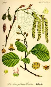 escape of the invasives top six invasive plant species in the 89 best flora danica tavler images on pinterest botanical