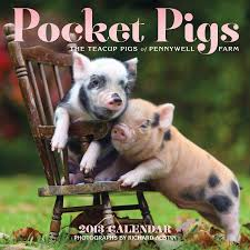 amazon com pocket pigs 2013 wall calendar the teacup pigs of