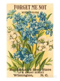 forget me not seed packets forget me not seed packet seed packets scale and vintage seed