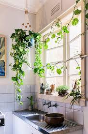 plante de cuisine plante cuisine decoration idées décoration intérieure
