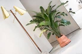 floor plant céline in soho atelier doré