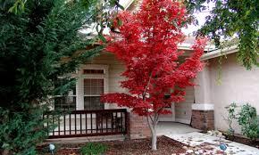 small garden trees and shrubs cori matt garden