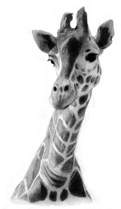 pictures black and white wildlife drawings drawing art gallery