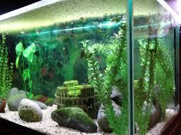 types of oscar fish