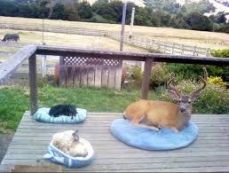 deer licks hunters rifle eyebleach