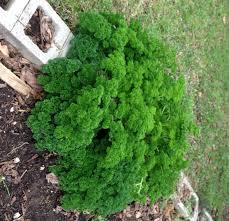 herb gardening for beginners vegetable garden blog