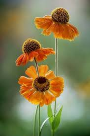flowers images 266 best flowers images on pinterest flowers plants and nature