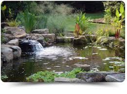 swim ponds splashscapessplashscapes