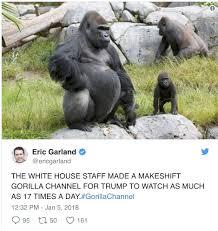 Gorilla Meme - trump s gorilla channel a twitter joke gone wrong slashgear
