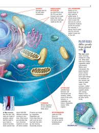 the cell anatomy images human anatomy learning
