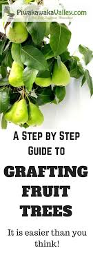 best 25 grafting fruit trees ideas on types of fruit