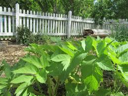 news from the herb garden may 15 2017 u2013 woldumar nature center