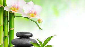 spa images hd spa stones bamboo pink flower wallpapers hd for desktop desktop