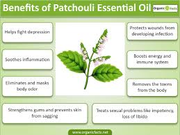 Essential Oils For Hair Loss 15 Amazing Benefits Of Patchouli Essential Oil Organic Facts
