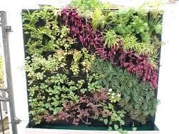 outdoor vertical garden green wall living wall by vertical