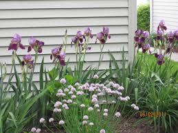 Home Garden Design Tips Iris Garden Design Small Home Decoration Ideas Fancy On Iris