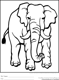 coloring african animals kids coloring