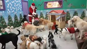 santa paws came to visit the doggies youtube