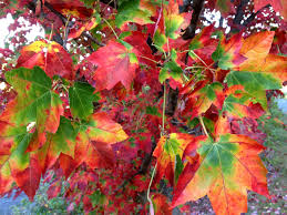 10 beautiful plants fall foliage walk arnold
