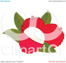 lychee fruit clipart of tropical exotic lychee fruit royalty free vector