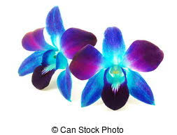 blue and purple orchids blue and purple orchid flower wedding tips and inspiration