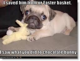 Easter Egg Meme - 20 happy easter egg hunting memes sayingimages com