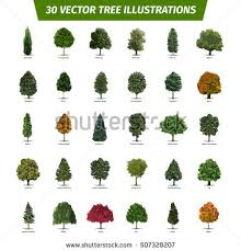 thirty different tree sorts names illustrated stock vector hd