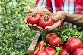 comment cuisiner les tomates s h s comment cuisiner les tomates régal