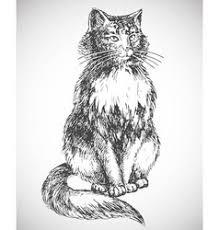 cat sketch royalty free vector image vectorstock