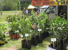 the native plant centre where to buy plants and pots on the sunshine coast sunshine coast