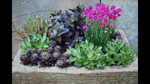 Small Rock Garden Design by Landscaping Succulents Succulent Rock Garden With Pictures Designs