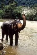 superstitions about elephants and their trunks the psychic well