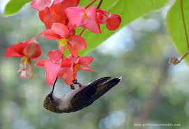 hummingbird flowers 37 flowers that attract hummingbirds to keep in your homestead
