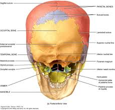 hard anatomy questions images learn human anatomy image