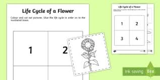 plant life cycle early years eyfs plants page 1