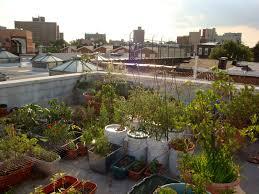 decorations amazing design rooftop garden ideas for stunning
