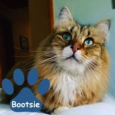meet the top 100 cutest cats winners vote for who advances to top