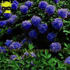 compare prices on fragrant flower plants online shopping buy low