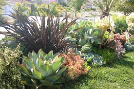 20 garden border designs agave attenuata agaves and plants
