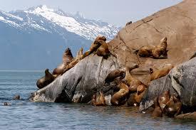 California wildlife tours images Glacier point wilderness safari skagway tours and shore excursions jpg
