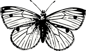 butterfly png hq png image freepngimg