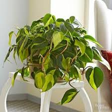 house plants low light 23 low light houseplants that are easy to maintain and nearly