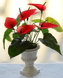 Design For Indoor Flowering Plants Ideas 10 Easy To Grow Indoor Plants In India Interior Design Ideas